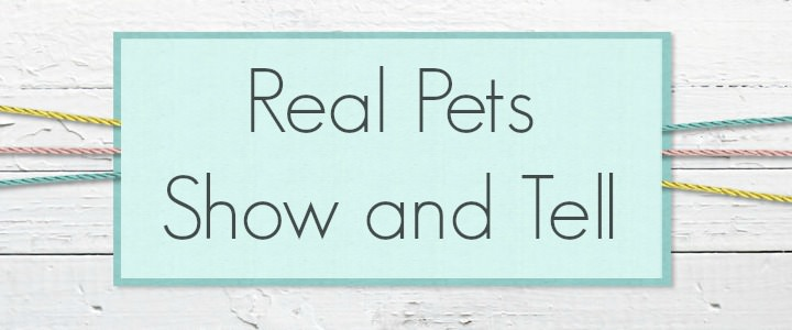 real pets show and tell
