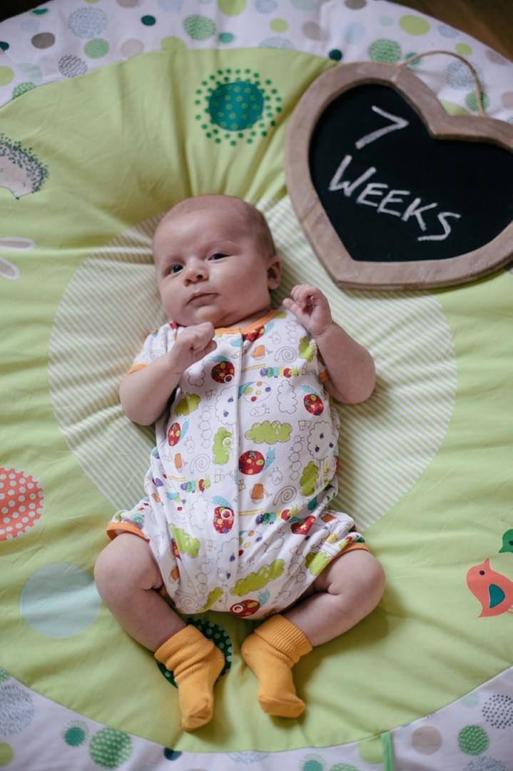 18 Dexter 2 - 8 Weeks