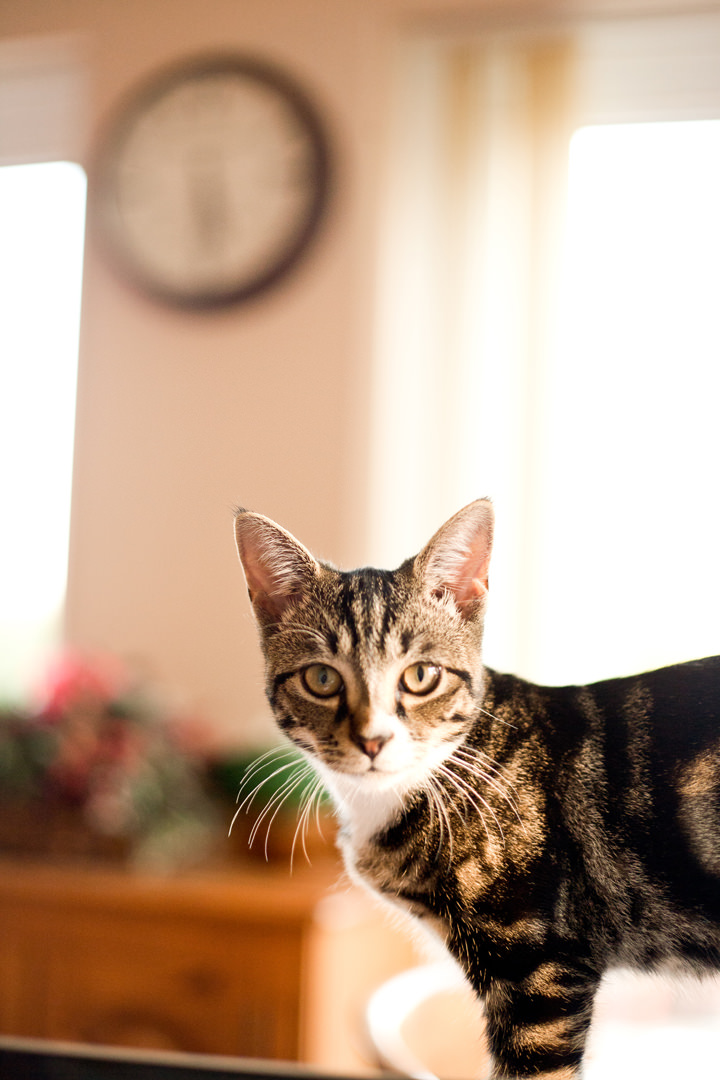14 Pet Photography by Courtney Louise Photography