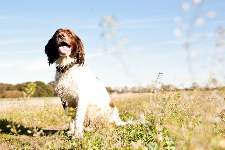 8 Pet Photography by Courtney Louise Photography