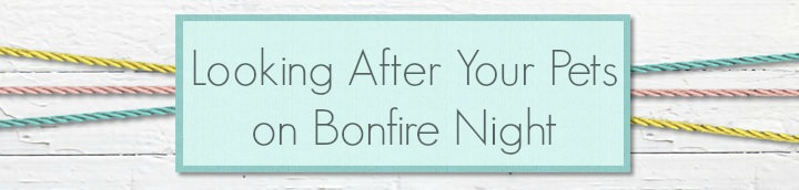 Looking After your Pets on Bonfire Night