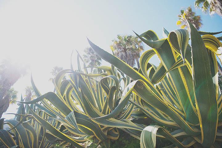 The Barcelona Cactus Garden. Mossèn Costa Montjuic by Rebecca Douglas Photography 12