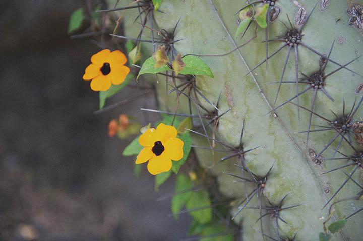 The Barcelona Cactus Garden. Mossèn Costa Montjuic by Rebecca Douglas Photography 17