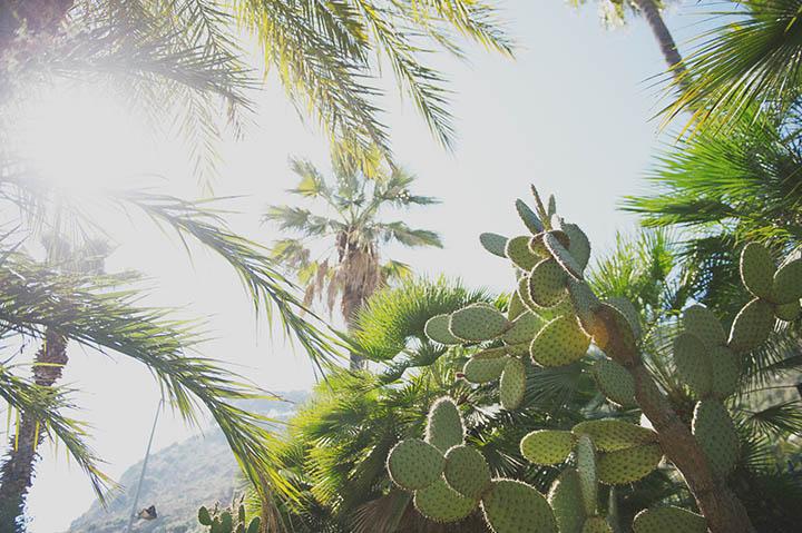 The Barcelona Cactus Garden. Mossèn Costa Montjuic by Rebecca Douglas Photography 6